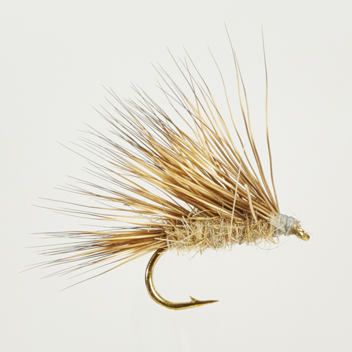CADDIS (SEDGE)-SEDGEHOG HARE'S EAR-0