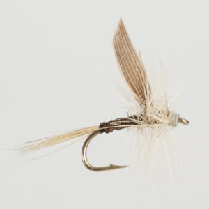 DRY WINGED-BLUE QUILL-0