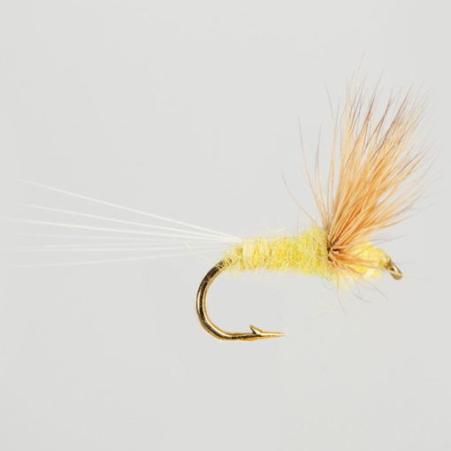 DRY WINGED-COMPARADUN-LT.YELLOW-0
