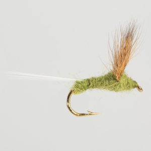DRY WINGED-COMPARADUN-OLIVE-0