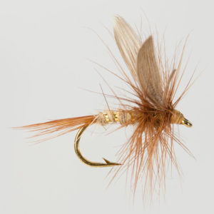 DRY WINGED-G.R. HARE'S EAR-0