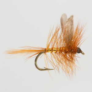DRY WINGED-WICKHAM'S FANCY-0
