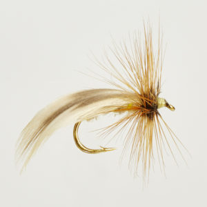 CADDIS (SEDGE) EUROPE -0