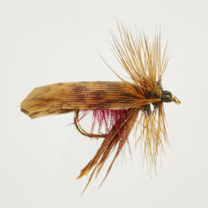 CADDIS (SEDGE)-MURROUGH-0