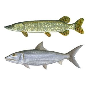 Pike and Saltwater Hooks